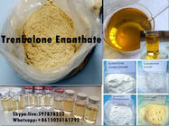 چین Yellow Steroid Powder Trenbolone Enanthate for Bodybuilding with Good Quality شرکت