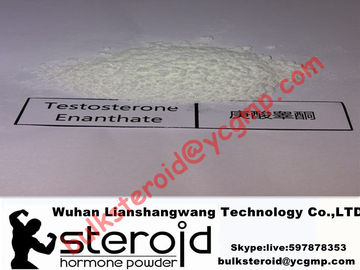 چین Healthy Anabolic Seroid White Powder Testosterone Enanthate for Bodybuilding 315-37-7 توزیع کننده